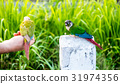 Parrot, lovely bird, freedom animal and pet 31974356