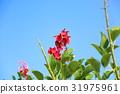 花朵 花卉 花 31975961