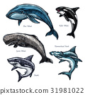 Giant sea animals whale and shark vector icons set 31981022