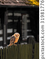 wood owl fence 31981776