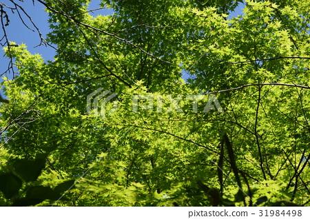 Fresh green 31984498