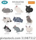 Chinchilla breeds icon set flat style isolated 31987312