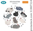 Chinchilla breeds icon set flat style isolated 31987314