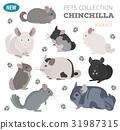 南美栗鼠 圖標 寵物 31987315