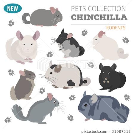 Chinchilla breeds icon set flat style isolated 31987315