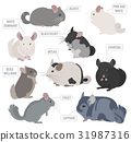 Chinchilla breeds icon set flat style isolated 31987316