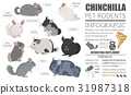 Chinchilla breeds icon set flat style isolated 31987318