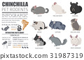 Chinchilla breeds icon set flat style isolated 31987319