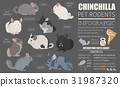 Chinchilla breeds icon set flat style isolated 31987320