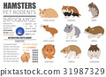 hamster icon pet 31987329