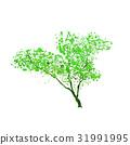 綠色 綠 樹木 31991995