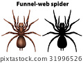 Funnel web spider in silhouette and colored 31996526