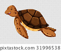 Sea turtle on transparent background 31996538