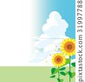 Sunflower and blue sky 31997788