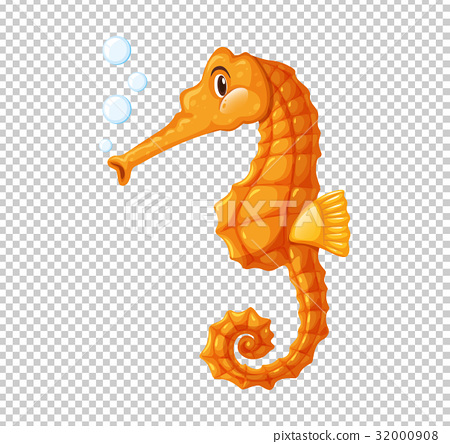Orange seahorse blowing bubbles 32000908