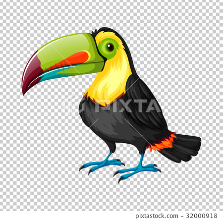 Toucan bird on transparent background 32000918