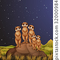 Meerkats standing on rocks at night 32000984