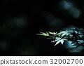 코치, 녹색, 잎 32002700