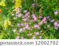 분홍색, 꽃, 핑크 32002702