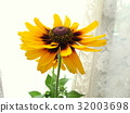 夏天 夏 花朵 32003698