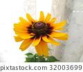 夏天 夏 花朵 32003699