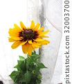 夏天 夏 花朵 32003700