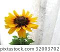 夏天 夏 花朵 32003702