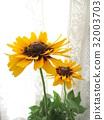 夏天 夏 花朵 32003703