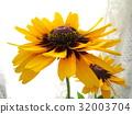 夏天 夏 花朵 32003704
