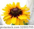 夏天 夏 花朵 32003705