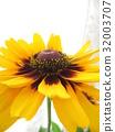 夏天 夏 花朵 32003707