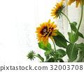夏天 夏 花朵 32003708