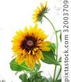 夏天 夏 花朵 32003709