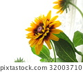 夏天 夏 花朵 32003710