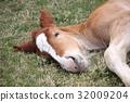 말, 아오모리, 시모키타 32009204