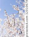ลูกท้อ,บ๊วย,ดอกไม้ 32010679