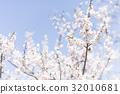 ดอกพลัม (พลัมสีขาว) 32010681