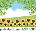 sunflower, sunflowers, summer 32013785