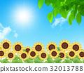 sunflower, sunflowers, bloom 32013788