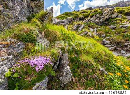 beautiful flowers on Steep slope of rocky hillside 32018681