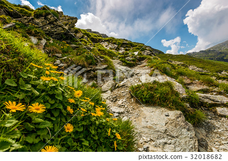 beautiful flowers on Steep slope of rocky hillside 32018682