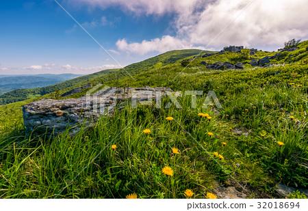 Dandelions among the rocks in Carpathian Alps 32018694