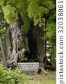 ต้นไม้การบูรที่ศาลเจ้ามังกรเมฆ (เมืองไอจิจังหวัดนาโกย่า) 32038061