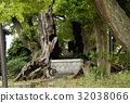 aichi prefecture, nagoycity, old tree 32038066