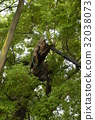 aichi prefecture, nagoycity, old tree 32038073