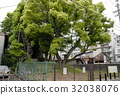 aichi prefecture, nagoycity, old tree 32038076