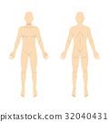 벡터, 세트, 인체도 32040431