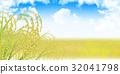 벼 가을 풍경 배경 32041798