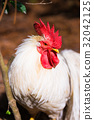 chicken, chickens, bird 32042125
