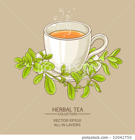 cup of marjoram tea 32042750